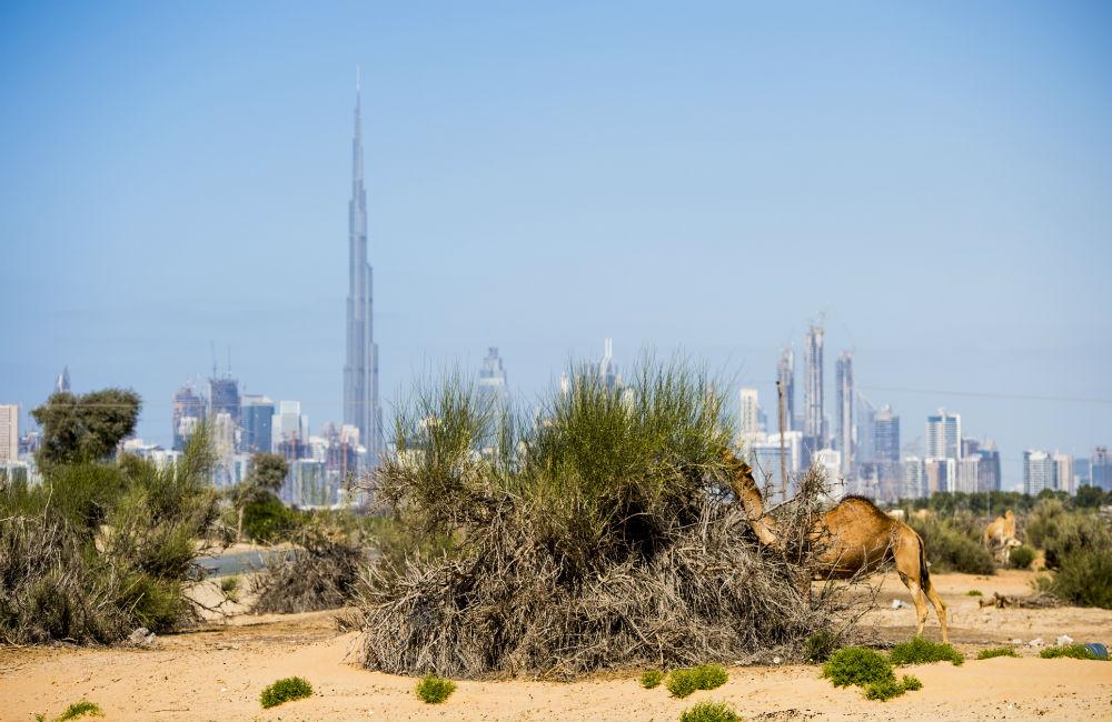Dubaibloggen: AIK på plats – Fotboll Sthlm skuggar i UAE